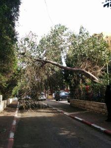 כבר התחילו ליפול עצים בחיפה ברחוב המים. צילום: כבאות חוף